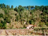 Das Haus mit seiner unmittelbaren Umgebung